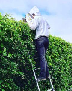 Wasp nest removal uckfield haywards heath tunbridge wells east grinstead